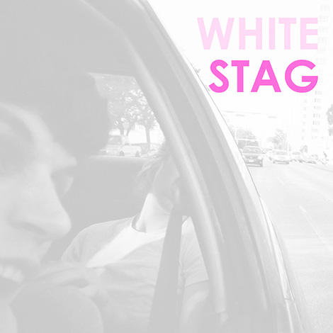 whitestag_470